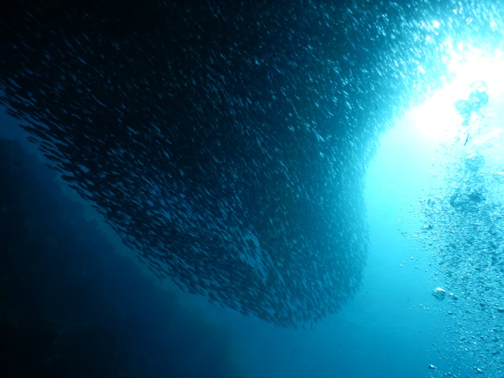 sardinesepic